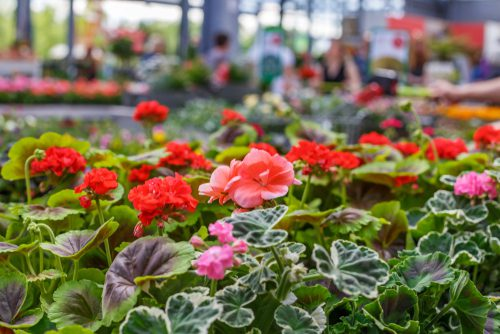 Area plant sales abound