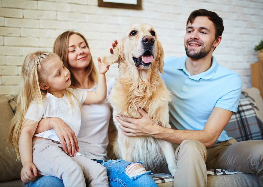 Ask Angie's List: How can I make my home more pet-friendly?
