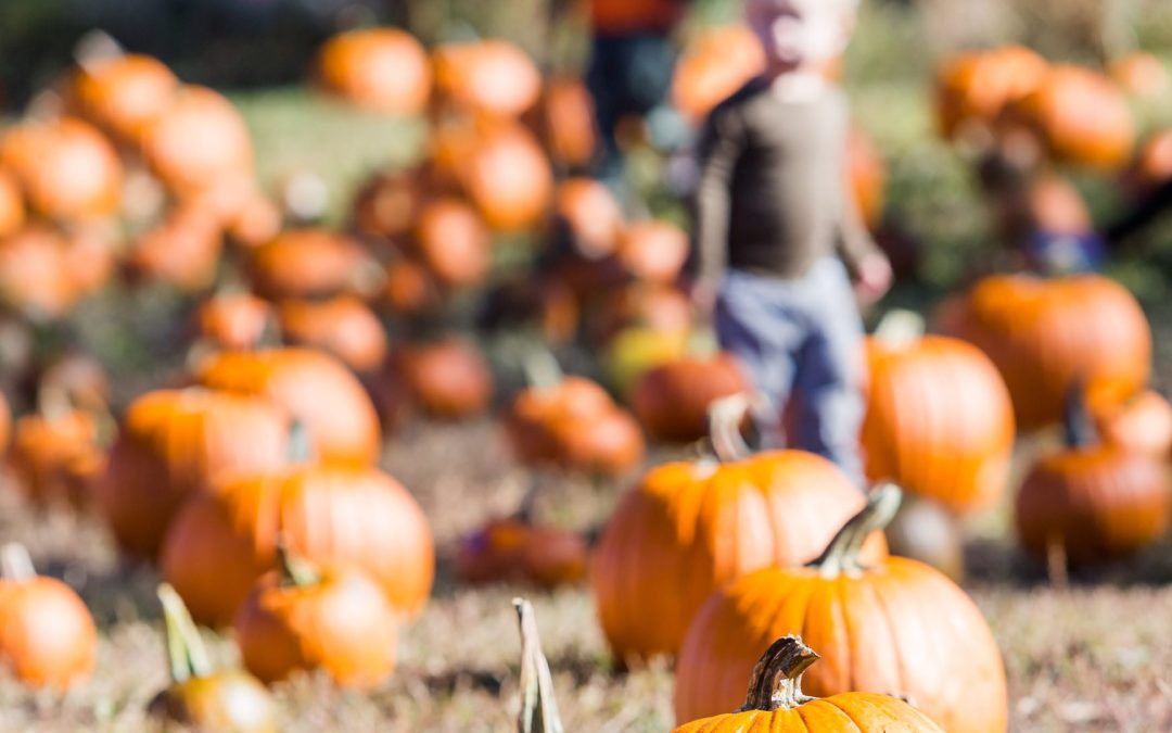 Pumpkin Patches are Perfect for Outdoor Fall Fun