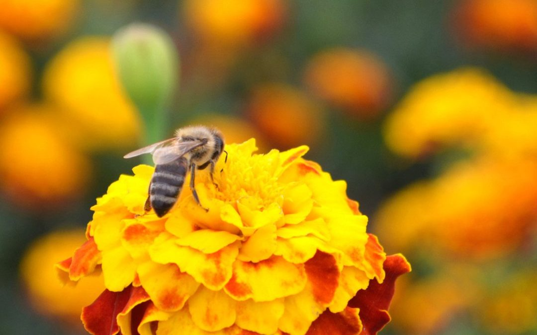 It's always a good time to celebrate pollinators