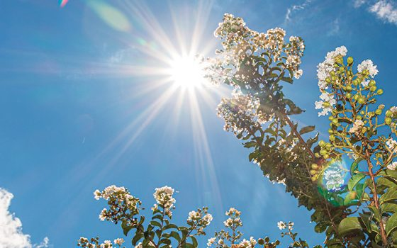 Help plants beat the summer heat