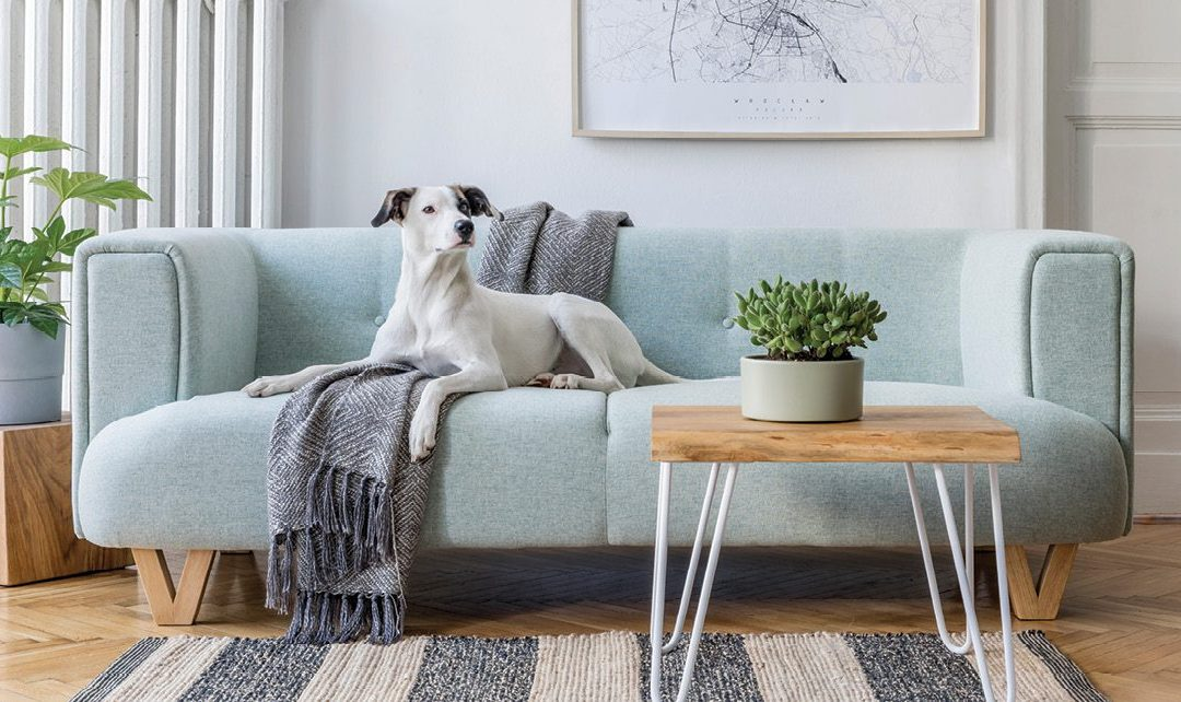 The Lighter Side: Get it right! Five tips for buying a sofa or sectional