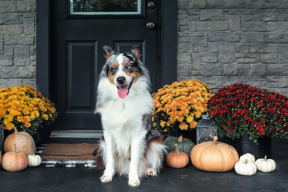 The Lighter Side: It's fall! Time to winterize your home and yard!