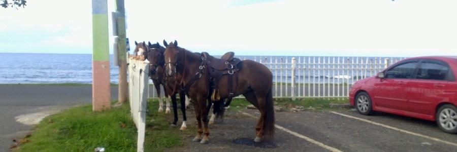 horses in puerto rico
