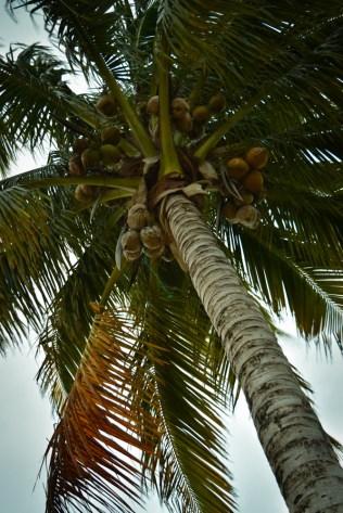 Go Ahead... Get Yourself an Island! Blackbird Island, Belize - Airbnb Private Island Escape (25)