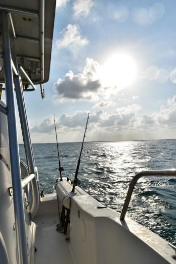 Go Ahead... Get Yourself an Island! Blackbird Island, Belize - Airbnb Private Island Escape (60)