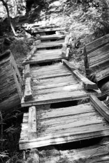 Cedar boardwalk