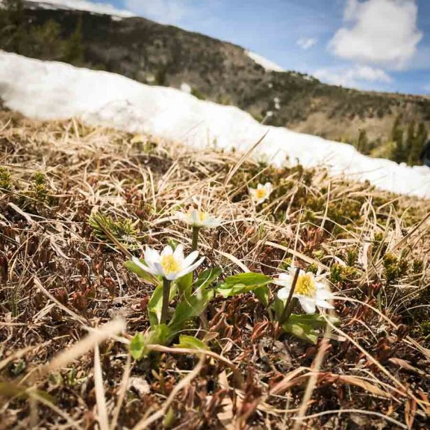 beautiful-images-that-will-make-you-want-to-visit-montanas-absaroka-beartooth-wilderness-athomeonthego.com-travel-blog-16-1