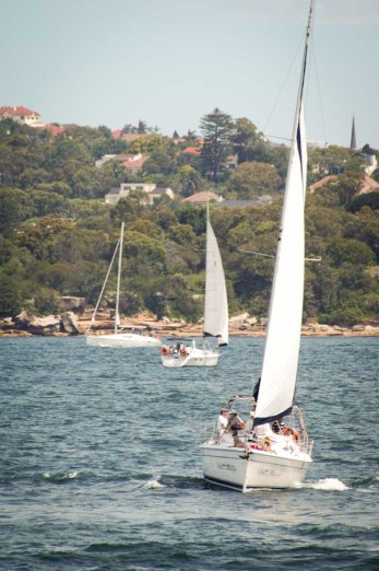 cheap-and-family-friendly-things-to-do-on-your-sydney-stopover-18