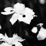 WORDLESS WEDNESDAY – 365Project.org Black and White Fortnight