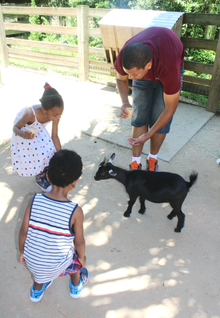 Orlando Vacation - Feeding the Goats - At Home With Zan