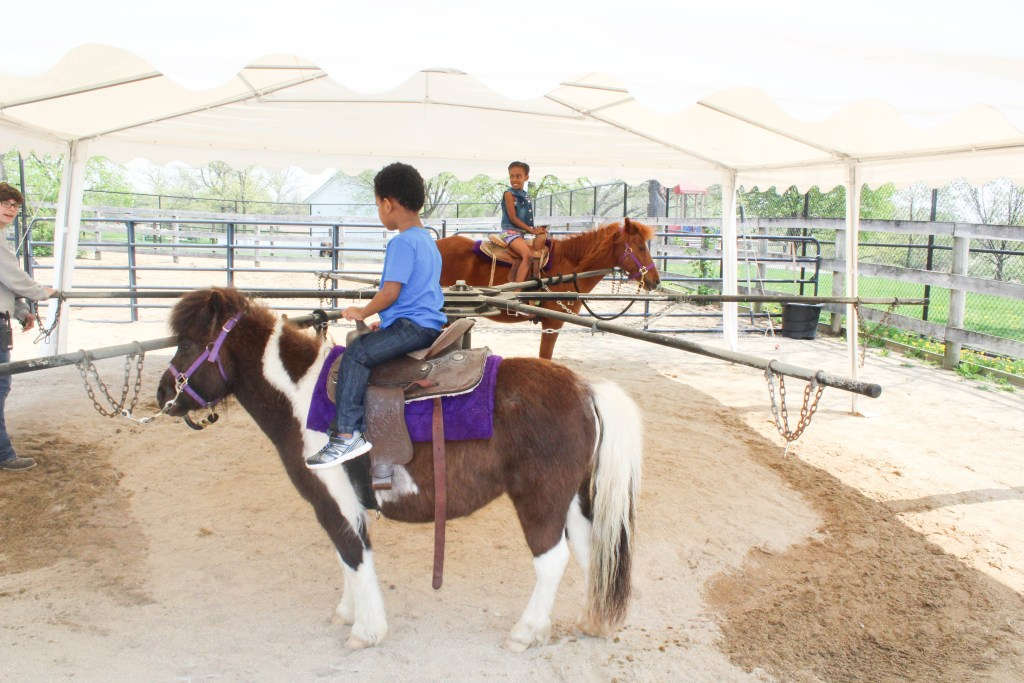 Field Trip to the Farm - And Petting Zoo - Animals - Pony Rides - At Home With Zan-