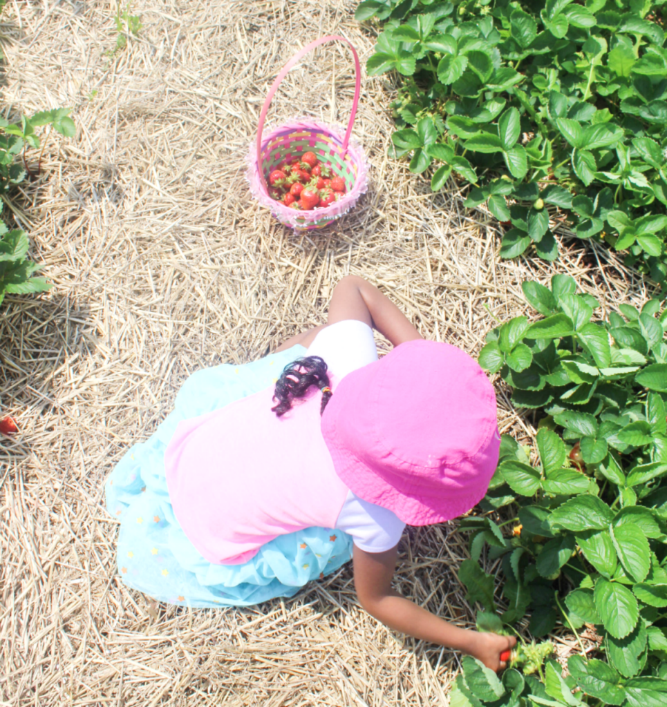 Trip to the Strawberry Farm - Family - Outing - Strawberry Picking With Kids - At Home With Zan-