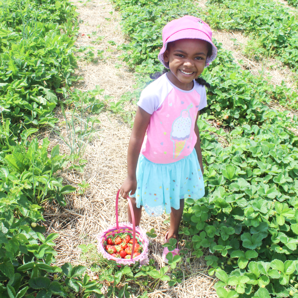 Trip to the Strawberry Patch -Strawberry - Picking - At Home With Zan