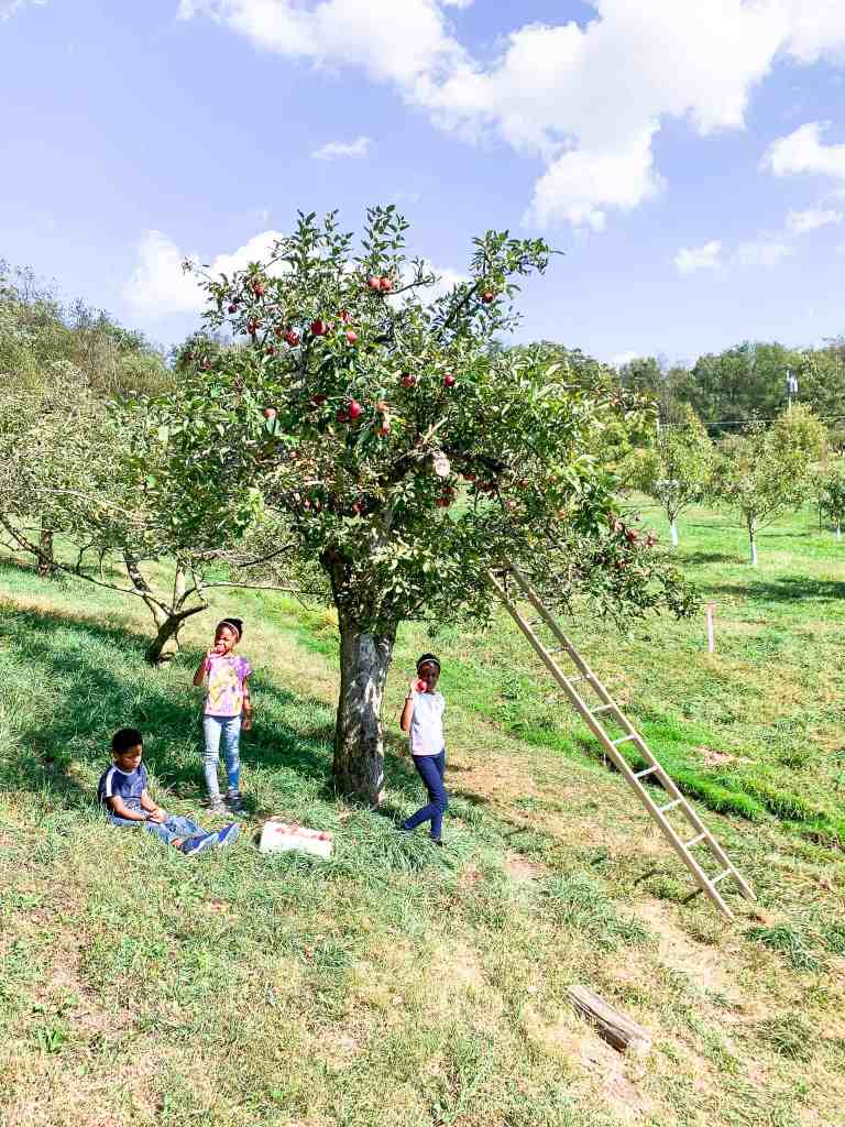 Apple Picking - Fall Family Activities