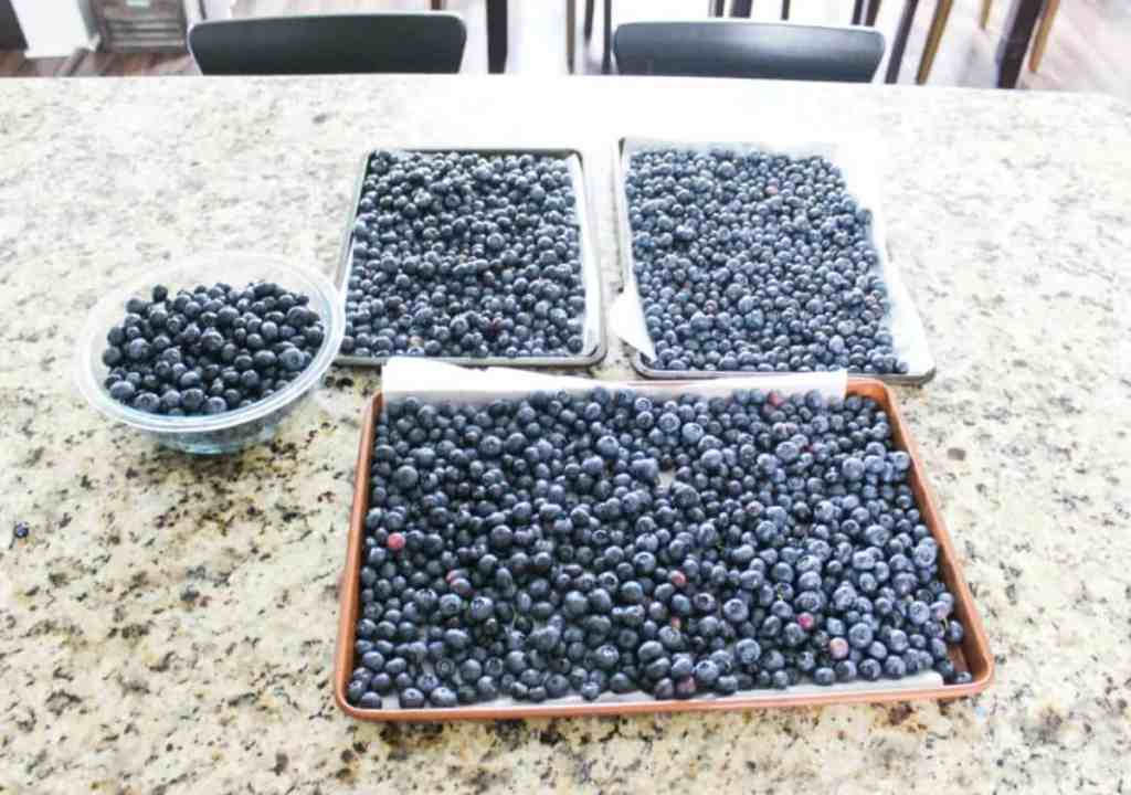 How to Wash and Freeze Berries
