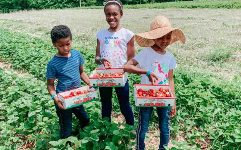 Going Strawberry Picking – A Summer Activity for Families