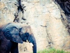 There were so many elephants! I was in love!