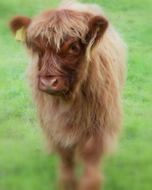 Baby Coo