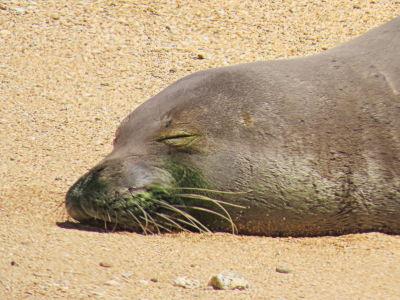Basking on the Beach