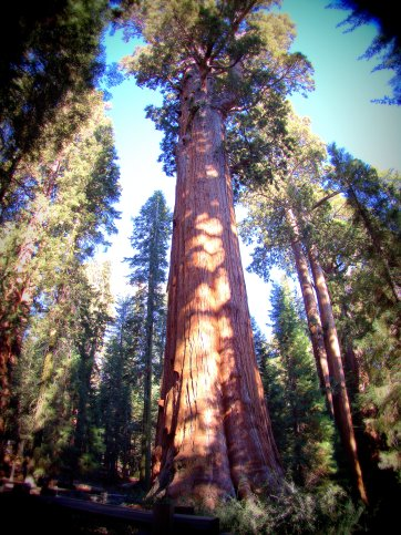Sequoia National Park - California