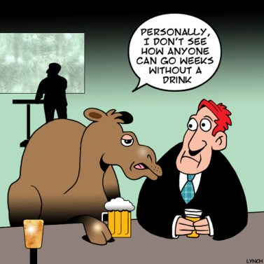 Camel Bar 7