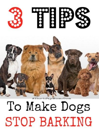 How To Get Dogs Stop Barking The Best Dog 2018