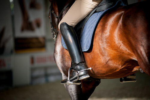 Learn how an equestrian keeps their horse healthy in summer.