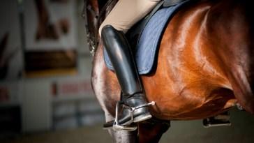 Learn how an equestrian keeps their horse healthy in summer.