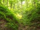 WWF-Romania anunta aprobarea unui instrument ce poate contribui la descurajarea taierilor ilegale