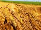 Pasi timizi in directia unei Politici Agricole Comune favorabile practicilor traditionale si mediului inconjurator