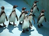 Pinguini sub tratament cu antidepresive din cauza vremii urate