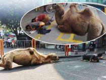Un nou mod de a cersi: mutilarea animalelor