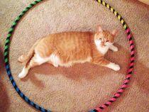 Nu aveti chef de joaca cu pisica? Faceti un cerc pe podea si ea va ramane acolo