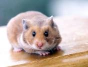 Lectie demonstrativa: Un profesor din Koreea de Sud a mancat un hamster de viu in fata elevilor sai