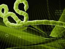 Virusul Ebola a reaparut la o femeie care fusese declarata vindecata