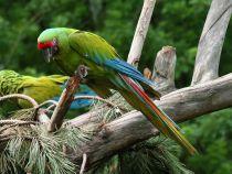Papagalii sunt capabili să ia decizii economice complexe