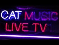 Cat Music Live TV / Non Stop Music 24/7