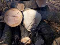 Pădurile, balastierele și locurile de depozitare a deșeurilor vor fi supravegheate din sateliți
