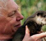 """Sir David Attenborough: Omenirea ar putea fi """"pe punctul de a destabiliza întreaga planetă"""""""