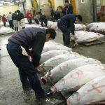 Prima licitație de pește din Japonia: un ton uriaș a fost vândut cu peste 200 milioane de dolari