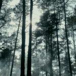 Aplicația Inspectorul Pădurilor nu va funcționa în următoarea săptămână | AUDIO