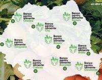 Știrea Verde: Combate risipa alimentară alături de Lidl
