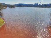 Eco Civica: Lacul IOR din Capitală, contaminat cu dejecţii   AUDIO