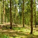 Florin Cîțu cere explicații legate de modul în care a avut loc campania de împădurire