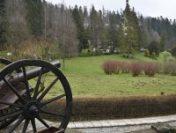 100 de brazi, plantați pe Domeniul Regal Peleș, pentru a marca 100 de ani de la nașterea Regelui Mihai