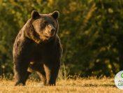 Tánczos Barna, după uciderea ursului Arthur: facem anchete, modificăm procedurile