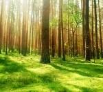 S-au redeschis traseele turistice din pădurile aflate în județul Arad