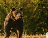 Prințul Emanuel de Liechtenstein susține că nu l-a împușcat pe ursul Arthur