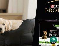 Oferă puiului tău de câine un start optim în viață și câștigă premii pentru el cu PURINA PRO PLAN, LA EUROPA FM! (P)